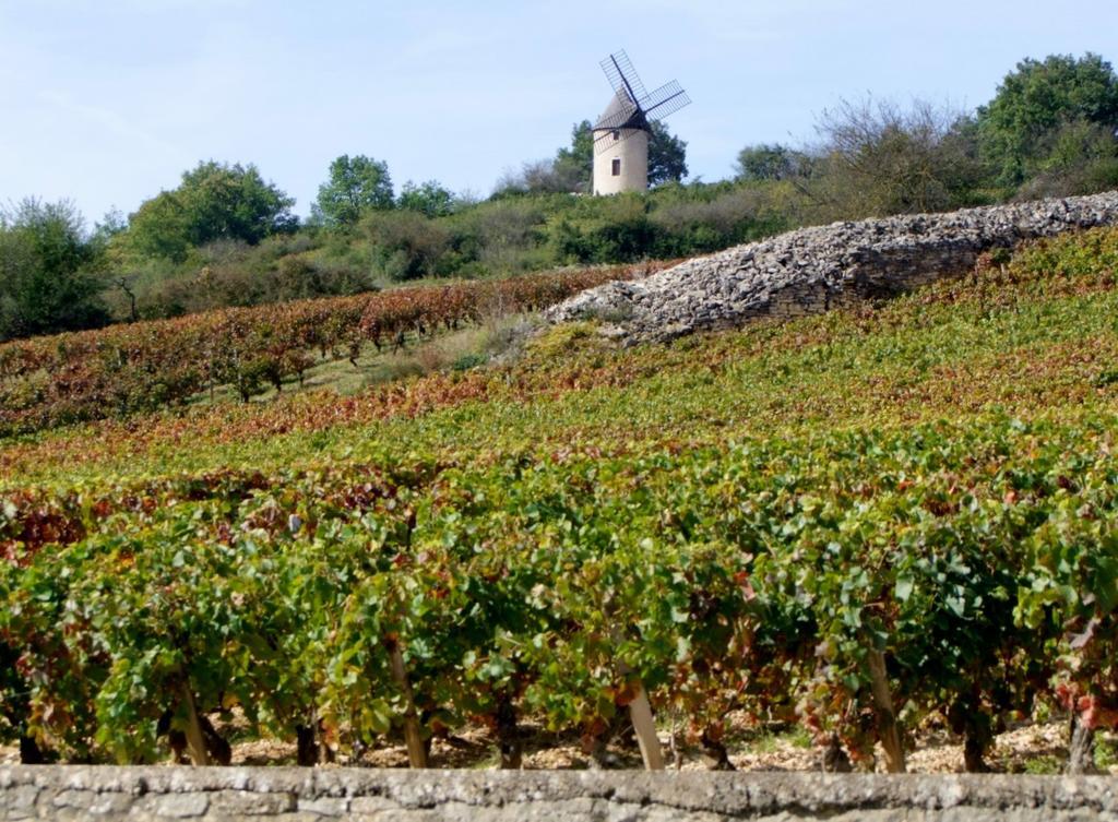 Moulin au nord-est du village à Santenay.